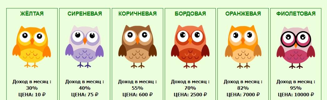 money-owls